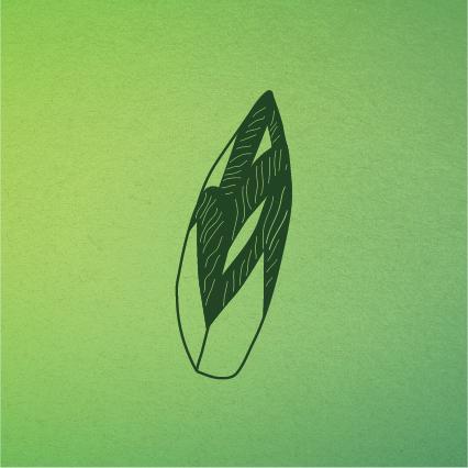 endivia-06